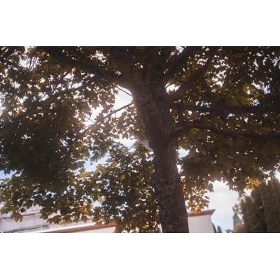 hochzeit-sophie-emanuel-91.jpg